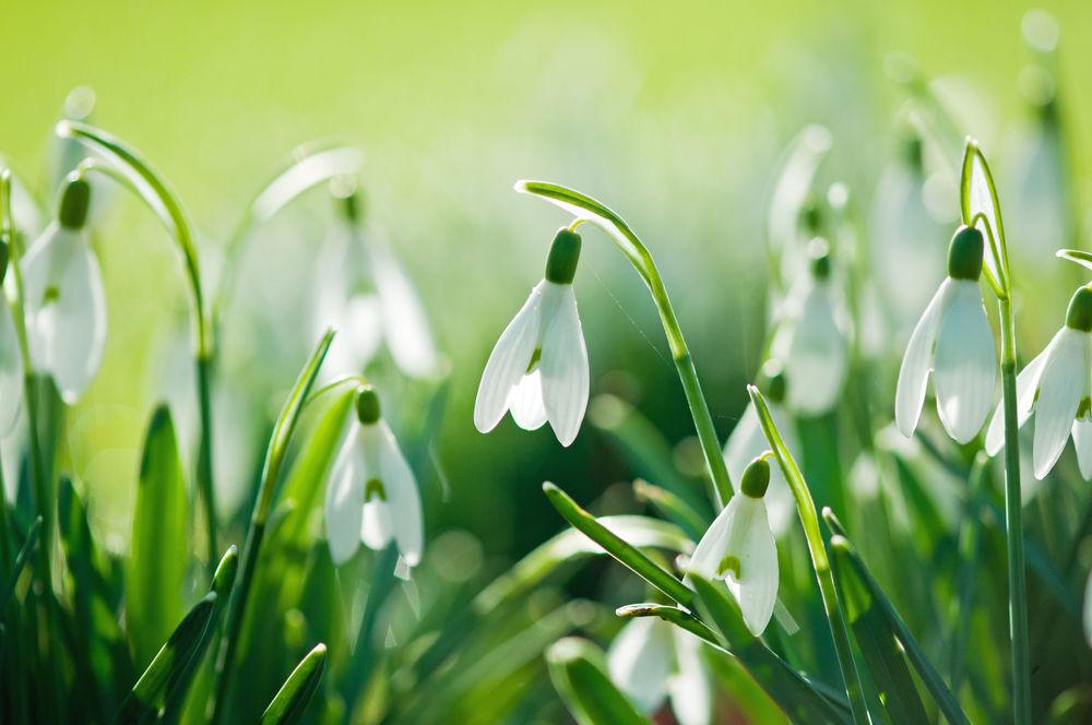 8 марта, весна