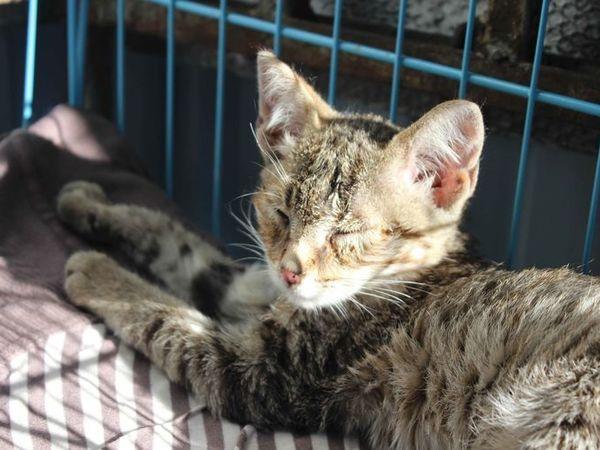 Нужны хозяева для котенка | Ярмарка Мастеров - ручная работа, handmade