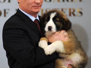 Владимир Путин и его собаки .Давайте посмотрим на питомцев. Ярмарка Мастеров - ручная работа, handmade.