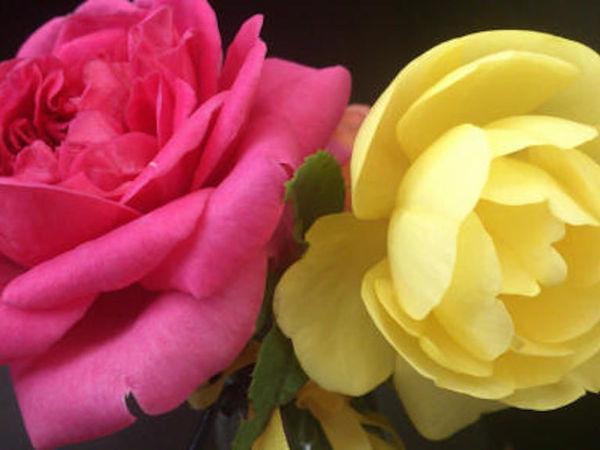 Конкурс коллекций розария и Розыгрыш приза среди подписчиков | Ярмарка Мастеров - ручная работа, handmade