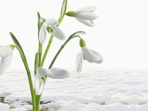 В честь первого дня весны СКИДКА 15% на все. Ярмарка Мастеров - ручная работа, handmade.