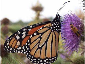 Бабочки — это цветы, которые сорвал ветер. Ярмарка Мастеров - ручная работа, handmade.