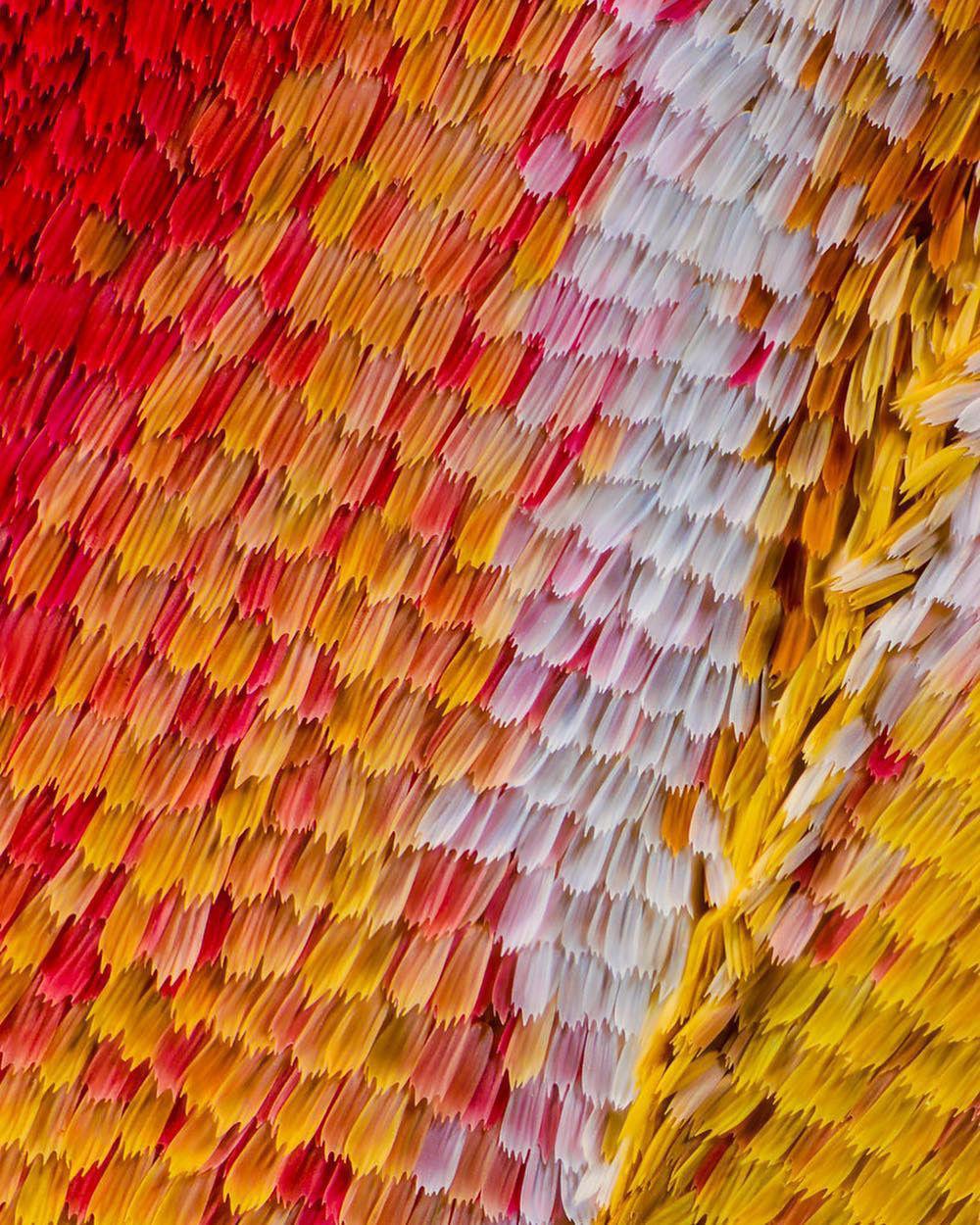 Бабочки, какими их никто не видит: невероятная макро-съемка от Chris Perani