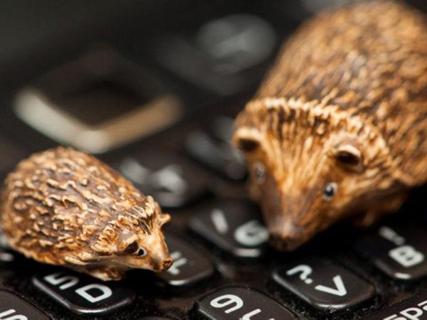 Животные в миниатюре от художника Sadie Campbell