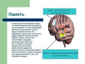 Новые упражнения нашей зарядки для мозгов!  Развиваем творческое мышление! | Ярмарка Мастеров - ручная работа, handmade