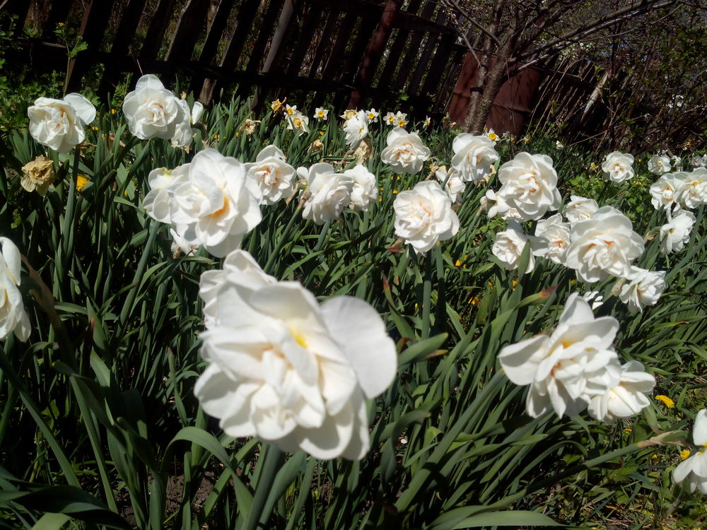 цветы моего сада