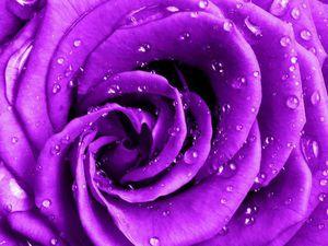 Розыгрыш сумки-розы среди подписчиков цветника (часть 2) | Ярмарка Мастеров - ручная работа, handmade