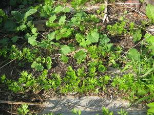 Приглашаю на прополку морковки или пойдем искать сорняки. Ярмарка Мастеров - ручная работа, handmade.
