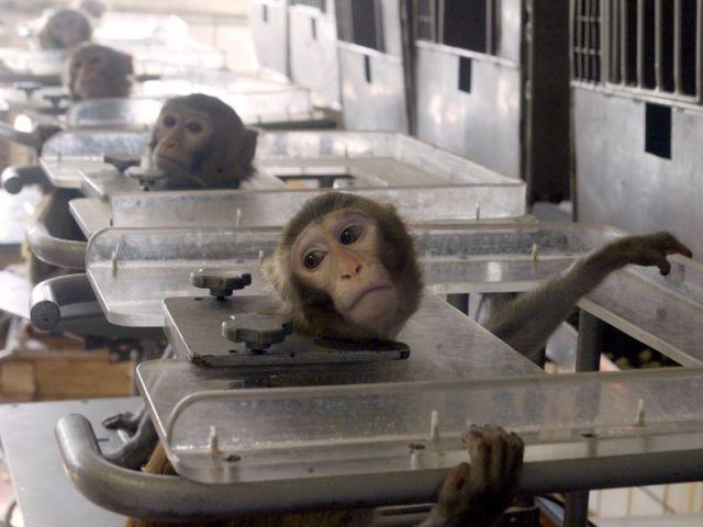 защита животных, братья наши меньшие, внимание