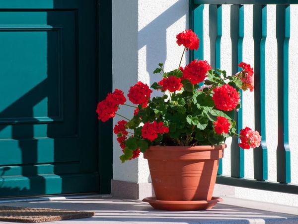 Цветы......Вот как их не любить?) | Ярмарка Мастеров - ручная работа, handmade