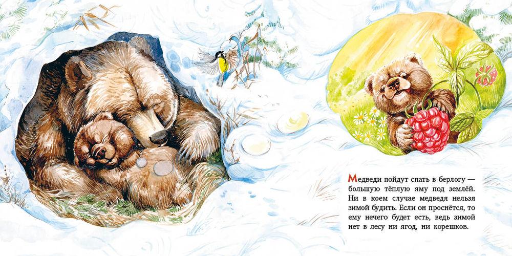 картинка мишка спит в берлоге зимой политические решения многое