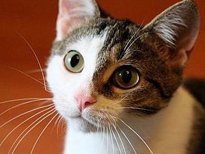 кошка, благотворительная акция, купить, сеня, кукла, витрина, животное
