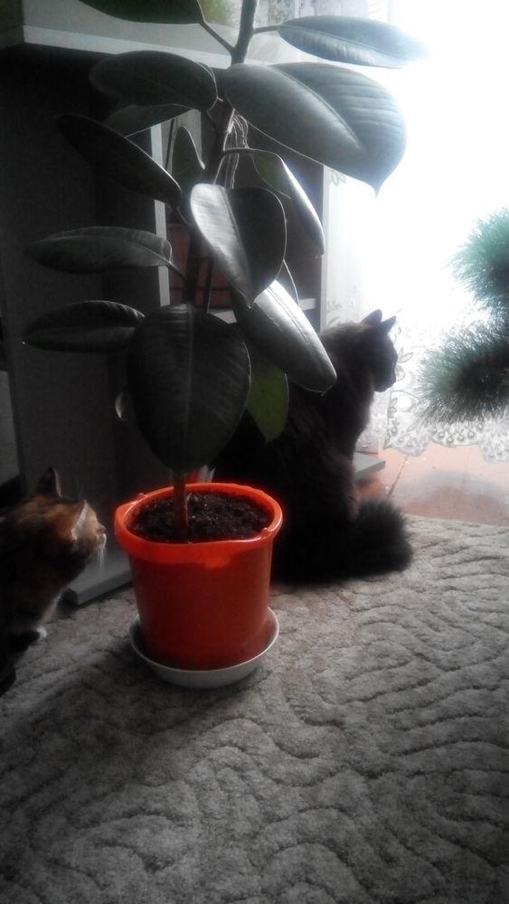 коты и елка, елка и новый год