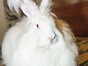 Пуховое кролиководство - неожиданное хобби. | Ярмарка Мастеров - ручная работа, handmade