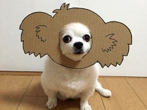 Щенячья радость: пёс-модель японской художницы  Semba. Ярмарка Мастеров - ручная работа, handmade.