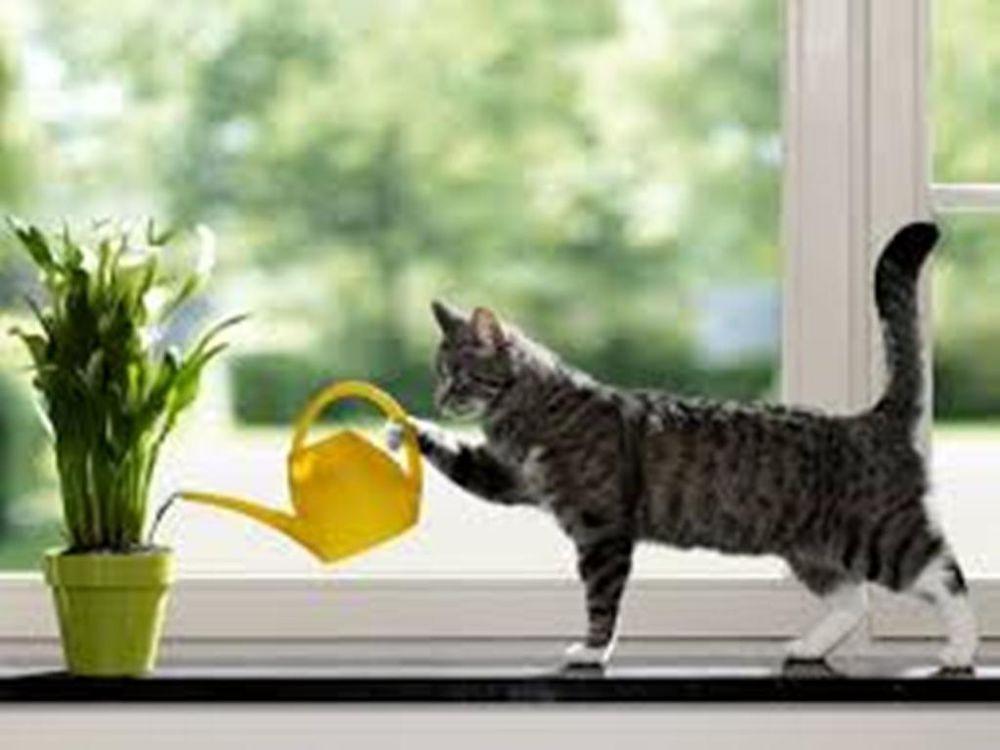 кошки, мех
