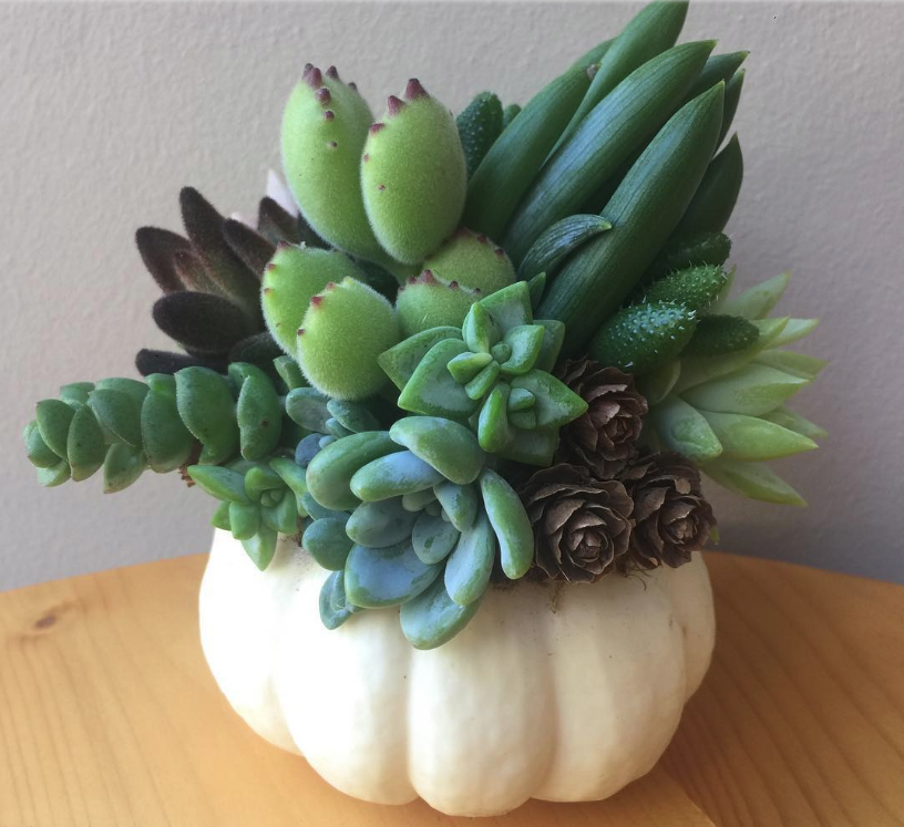You'll Refuse to Carve Scary Pumpkins Seeing These Gorgeous Ideas with Succulents, фото № 2