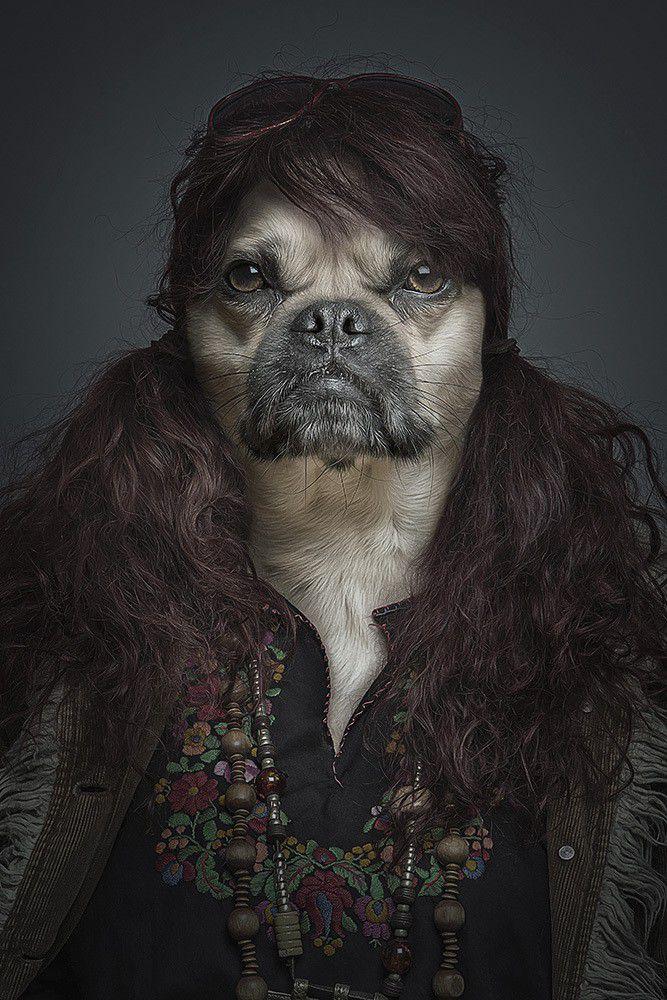 dog that looks human - 600×900