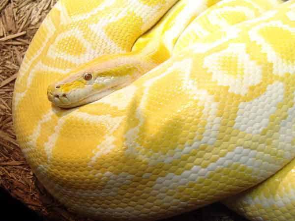 змеиная кожа