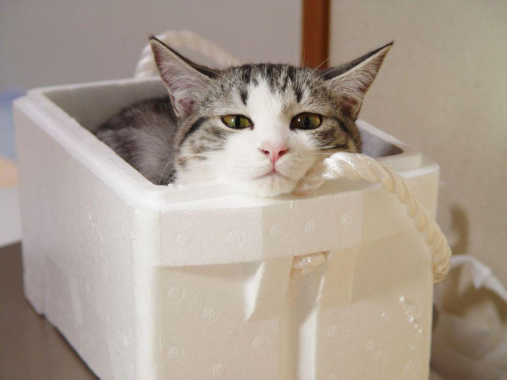 кошки и котики