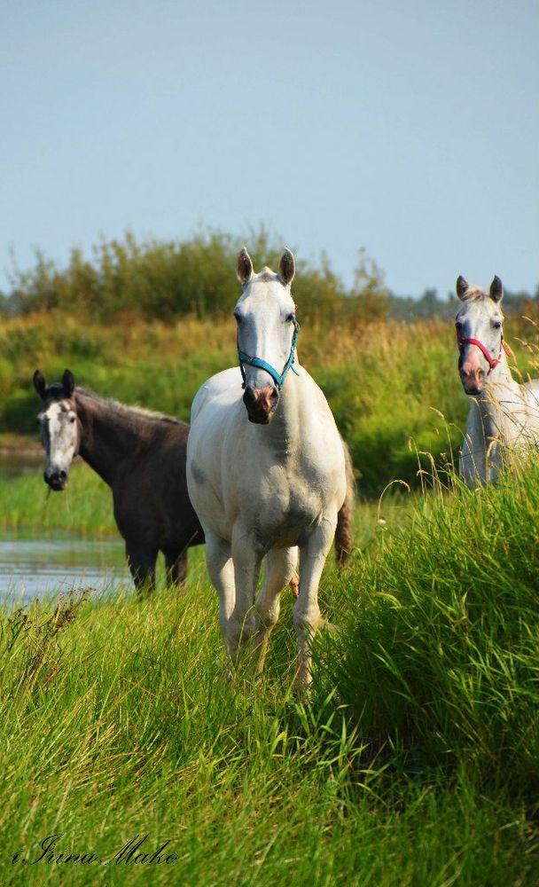 фотографии с лошадьми