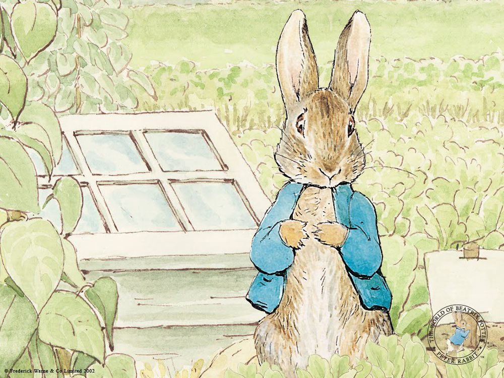 кодлер peter rabbit, wedgwood