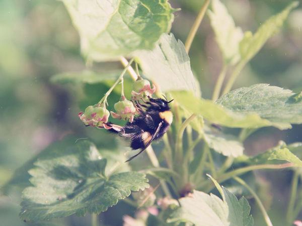 Что здесь происходит? Или моя Bee Lovers Story | Ярмарка Мастеров - ручная работа, handmade