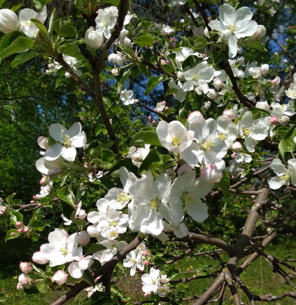 заготовка весенних цветов