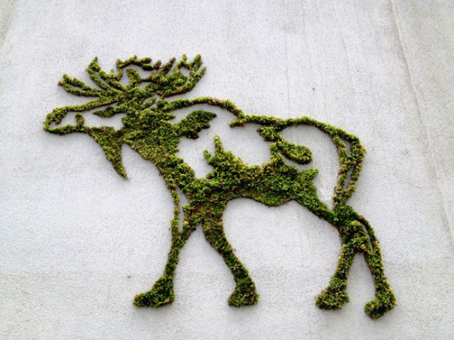 мох, идеи для творчества
