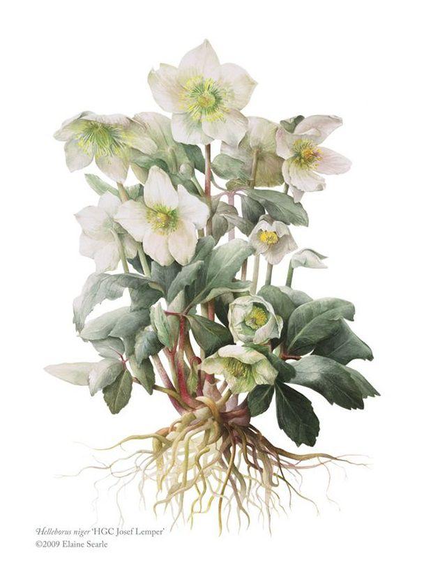 первоцветы акварелью