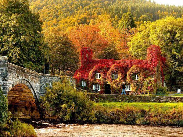 Тематический Осенний аукцион