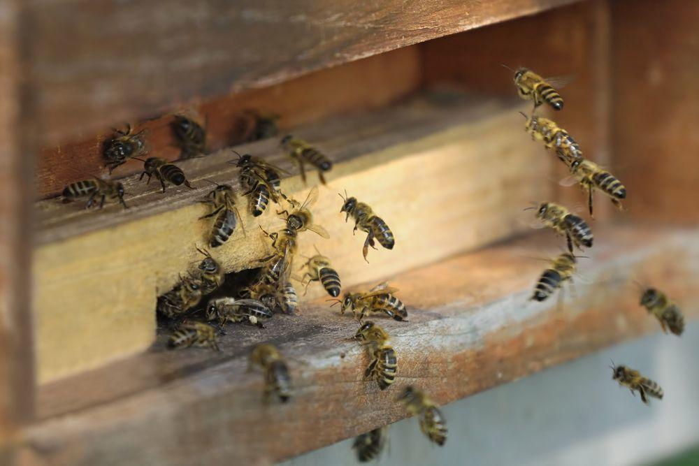 рэйки пчёл, волшебство, магия пчёл, счастье