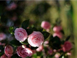 Аукцион на высокий браслет манжета,с розовым цветком. Ярмарка Мастеров - ручная работа, handmade.