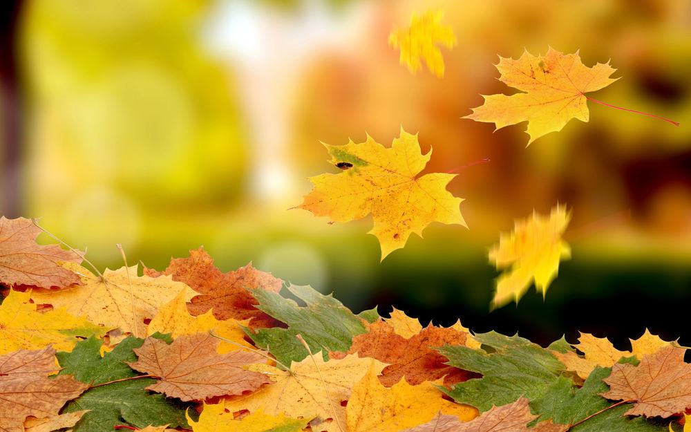 осень, листопад, деньзнаний