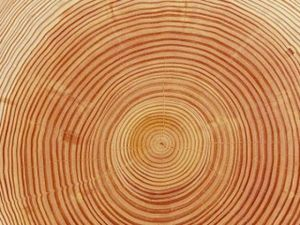 Выбираем древесину.Часть 2. Ярмарка Мастеров - ручная работа, handmade.