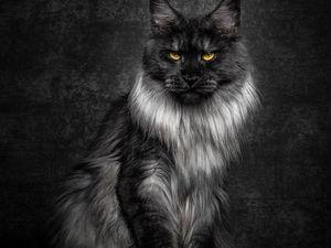 Короли среди кошек. Мейн-куны. | Ярмарка Мастеров - ручная работа, handmade