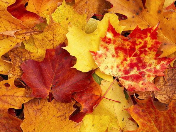 Осень на носу   Ярмарка Мастеров - ручная работа, handmade