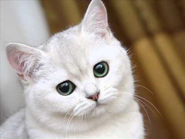 О котиках | Ярмарка Мастеров - ручная работа, handmade