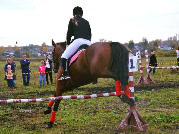 Межрегиональные конно-спортивные соревнования