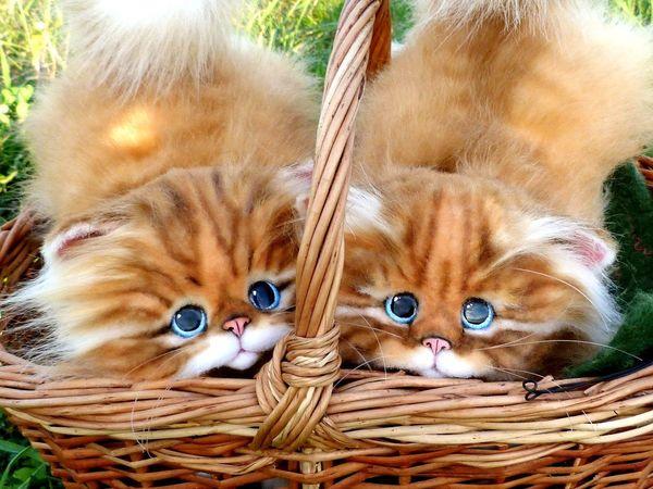 Коты и Цветы (история одной фотосессии)   Ярмарка Мастеров - ручная работа, handmade
