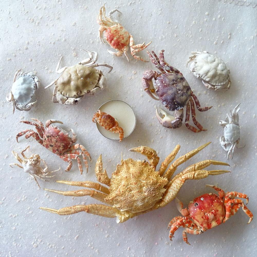 краб, краб морской, пополнение магазина, пополнение ассортимента, море, новая коллекция, обновление ассортимента, морская тема, морской сувенир, новинка, бартер, лето, пляж