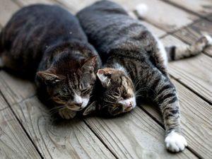 Два кота: нужны ваши советы). Ярмарка Мастеров - ручная работа, handmade.