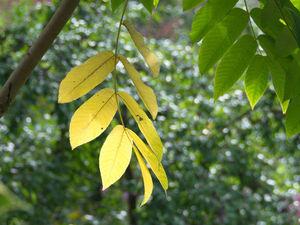 Как сделать интересный фон для композиции из осенних листьев. Три варианта из папье-маше. Ярмарка Мастеров - ручная работа, handmade.