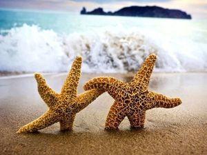 Приглашение в гости к морю и тропикам! | Ярмарка Мастеров - ручная работа, handmade