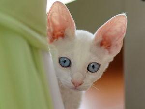 Фотоконкурс! Мне нужна ваша кошка! | Ярмарка Мастеров - ручная работа, handmade