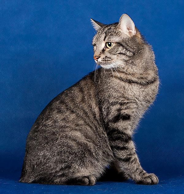 Полосатики и их друзья ищут дом! Каждой кошке — свою семью!!, фото № 5
