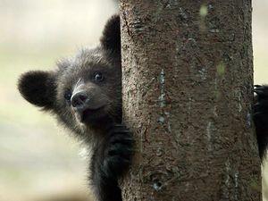 А вы слышали ,как мурчит медведь ?. Ярмарка Мастеров - ручная работа, handmade.