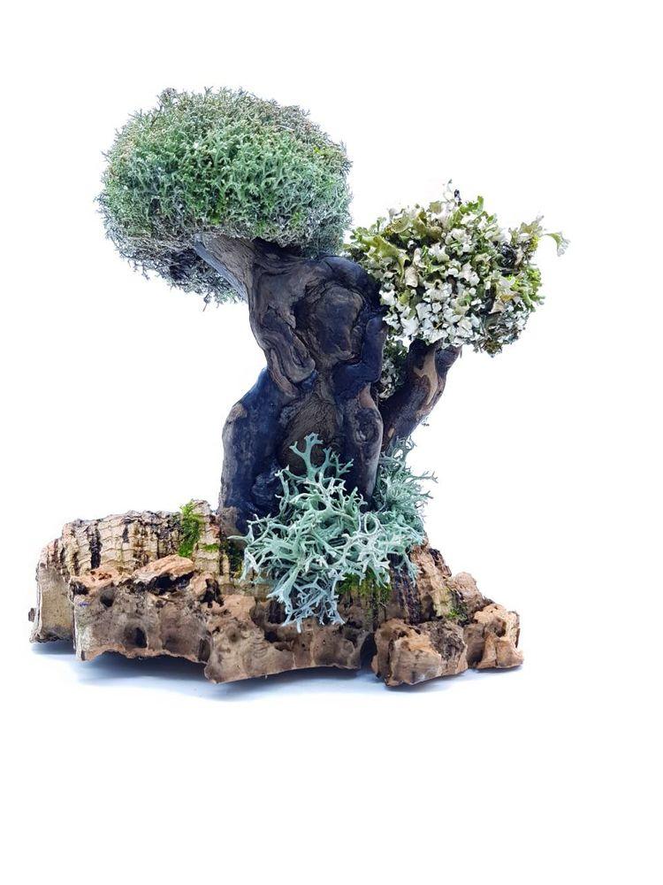 полезный подарок маме, подарок для мамы, крона из живой цетрарии, цетрария, дерево из цетрария, исландский мох