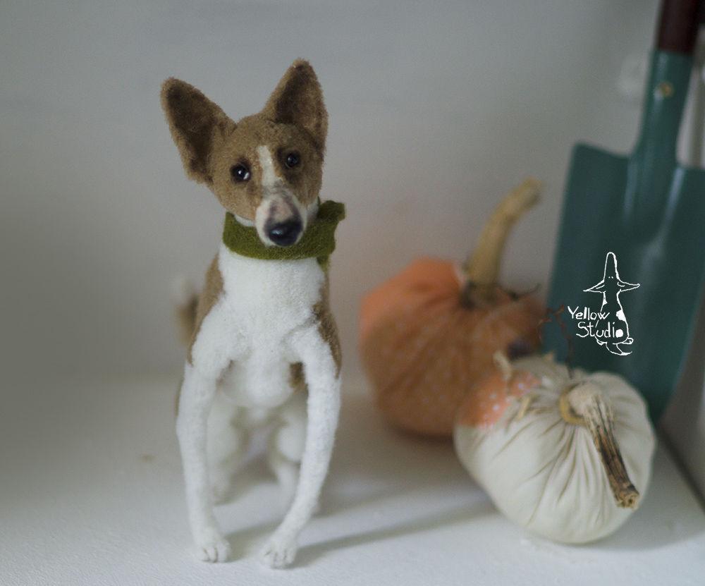 Моня собак, фото № 5