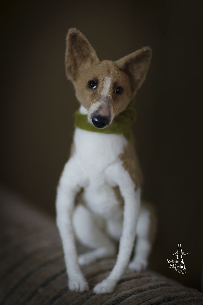 Моня собак, фото № 3